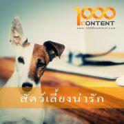 บทความสัตว์เลี้ยง จำนวน 10 บทความ By หนึ่งพันบทความ (AFS-07FEB-003)