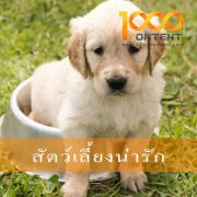 บทความสัตว์เลี้ยง จำนวน 10 บทความ By หนึ่งพันบทความ (AFS-07FEB-001)