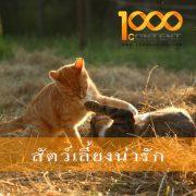 บทความสัตว์เลี้ยง จำนวน 10 บทความ By หนึ่งพันบทความ (AFS-07FEB-002)